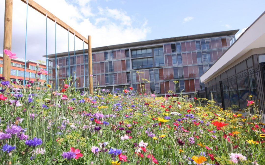 Une magnifique prairie fleurie autour de l'Hôpital d'Arras