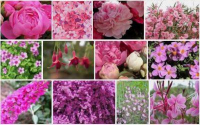 Un bel été actif pour La Vie en Roses !